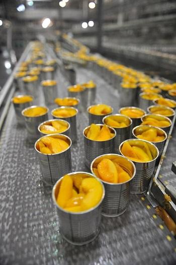 Băng chuyền chế biến giải pháp vàng cho ngành thực phẩm chế biến tại Việt Nam