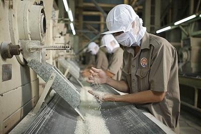Băng tải công nghiệp trong ngành sản xuất lúa gạo