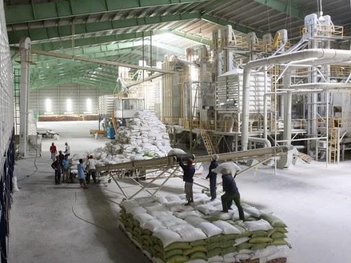 Băng tải lúa gạo – ưu tiên hàng đầu trong ngành xuất khẩu