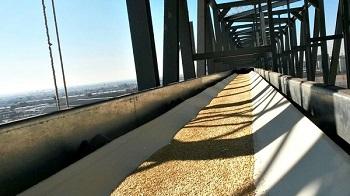 Băng tải lúa gạo rất cần thiết trong việc vận chuyển lúa gạo của doanh nghiệp Việt