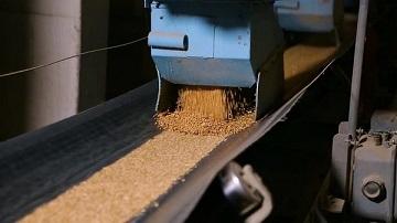 Băng tải lúa gạo thúc đẩy ngành công nghiệp sản xuất lúa gạo
