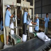 Băng tải lúa gạo