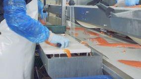 Băng tải phi lê cá băng tải cần thiết trong ngành công nghiệp thực phẩm
