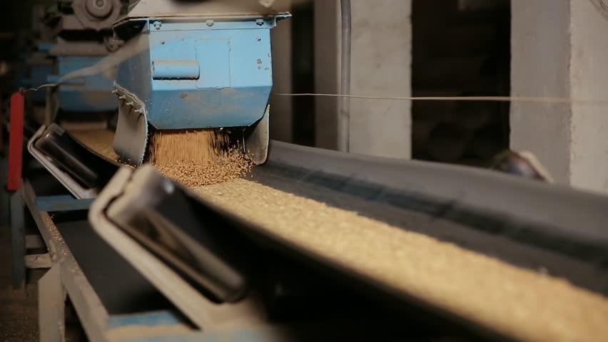 Hướng dẫn chọn băng tải cho vận chuyển các loại hạt