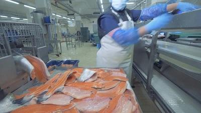 Những quy trình vệ sinh cho băng tải hàng thực phẩm
