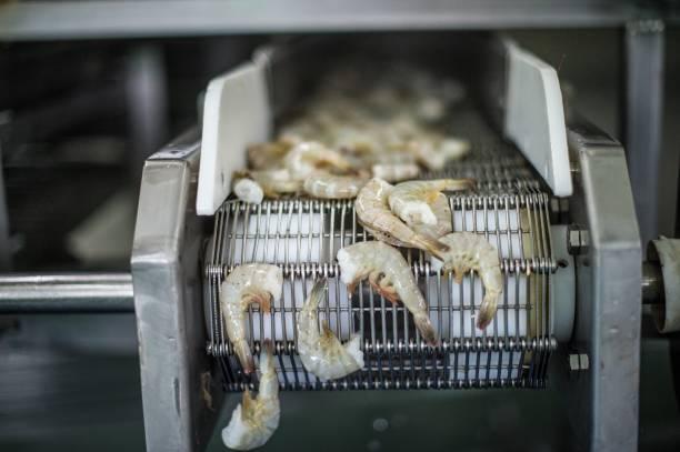 Quy trình và đặc điểm của băng tải hải sản