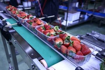 Ứng dụng vượt trội của hệ thống băng tải thực phẩm