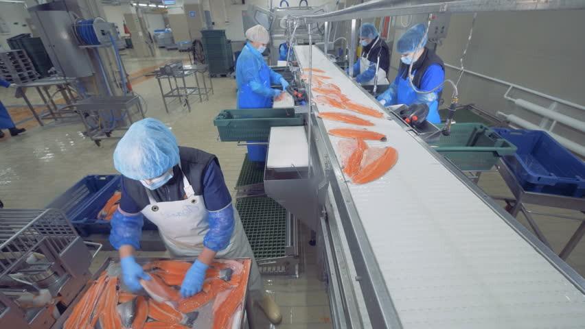 Vai trò nòng cốt của băng tải trong ngành chế biến thủy sản